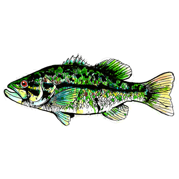 Artistic Smallmouth Bass Sticker